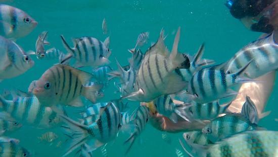 Green Island Divers