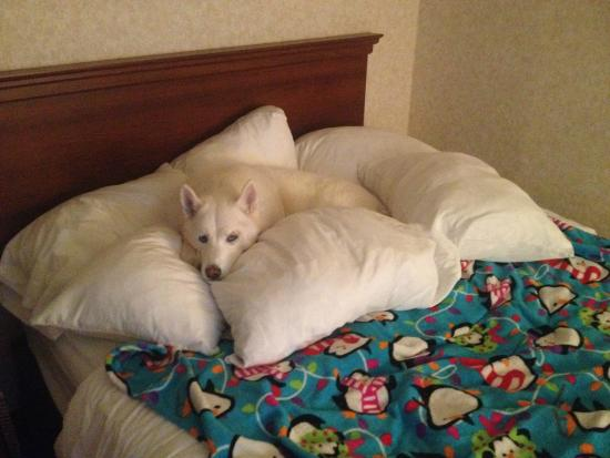 Bartonsville, PA: Our dog enjoyed having a whole bed to herself