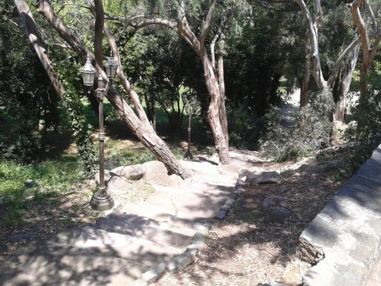 Monte Calvario : Bosque