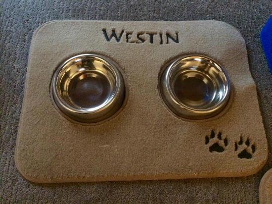 The Westin Stonebriar Hotel & Golf Club: Dog bowls