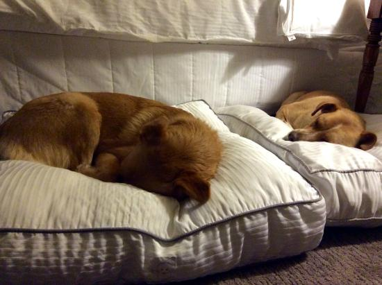 The Westin Stonebriar Hotel & Golf Club: Westin Heavenly Dog beds to use while we were there, our girls loved them!