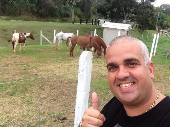 Hotel Fazenda 3 Pinheiros: Cavalos
