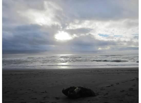 Punakaiki Beach Camp : sunset