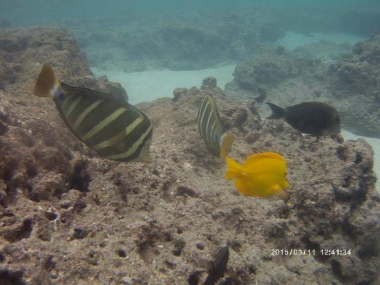 Hanauma bay nature preserve picture of snorkelfest for Plenty of fish oahu