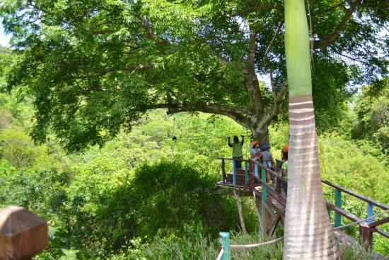 Antigua Rainforest Canopy Tour : Zip-lining platform