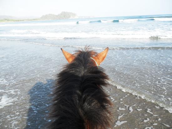 Horsejungle: sur la playa