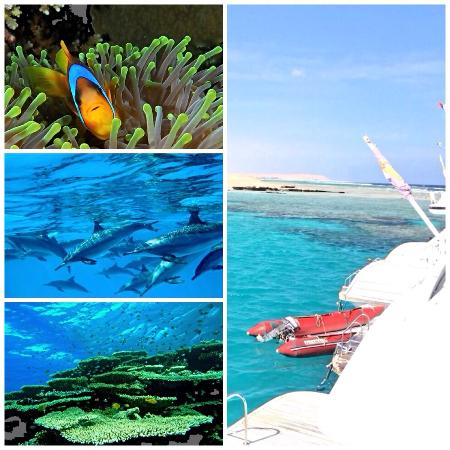 Marsa Alam, Egitto: Best snorkeling Tour with Chance