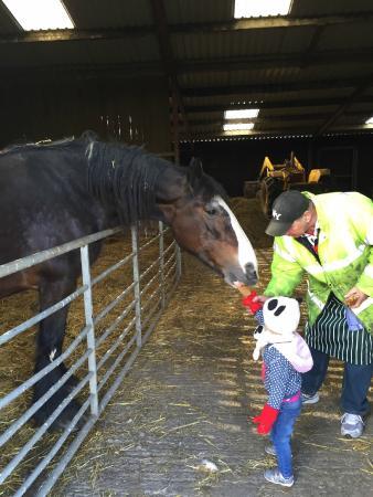 Isles Field Barn: Tour of the farm