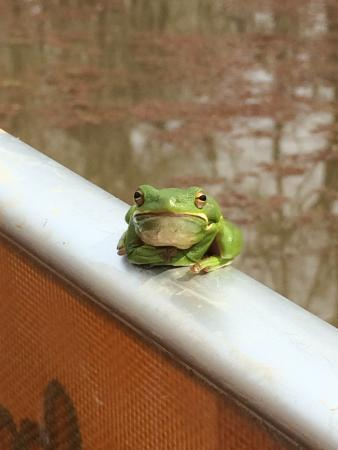Natchez, MS: This little guy hung out with us for awhile!