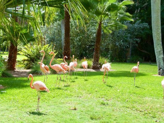 Blaue Aras Picture Of Sarasota Jungle Gardens Sarasota