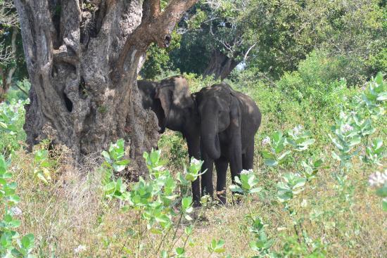 baby elefant in the mud picture of udawalawe national. Black Bedroom Furniture Sets. Home Design Ideas