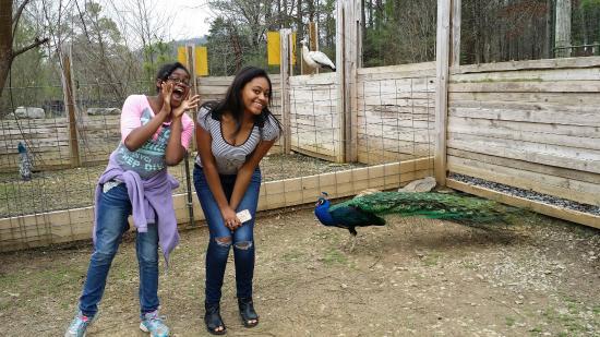 Huntsville, AL: Harmony Park Safari