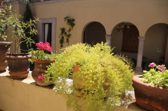 Casa Misha: Internal gardens