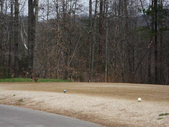 Townsend, TN: Laurel Valley Golf Course- March 2015