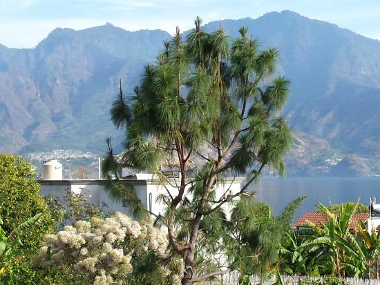 Casa Lobo Bungalows: One view from Torre II
