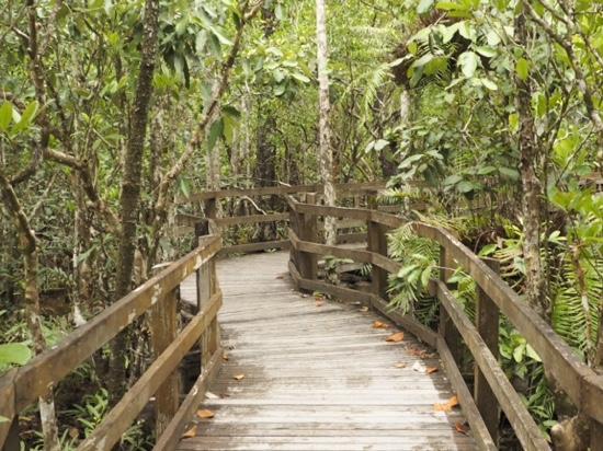 Marrdja Botanical Walk: boardwalk view