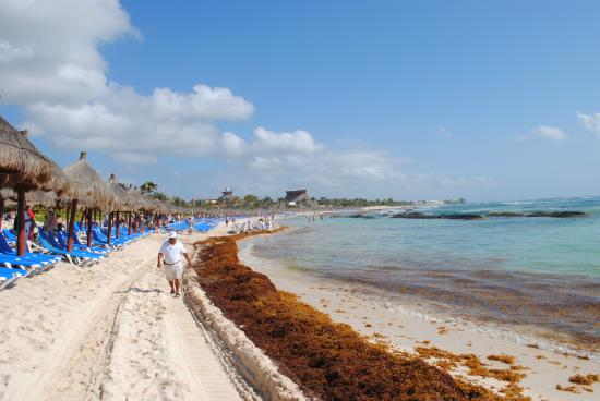 beach with seaweed - Picture of Grand Bahia Principe Coba, Akumal