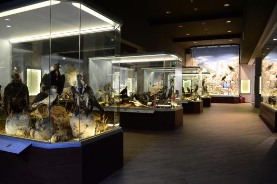 Μουσείο Φυσικής Ιστορίας & Μουσείο Μανιταριών: Μουσείο Φυσικής Ιστορίας Μετεώρων και Μουσείο Μανιταριών