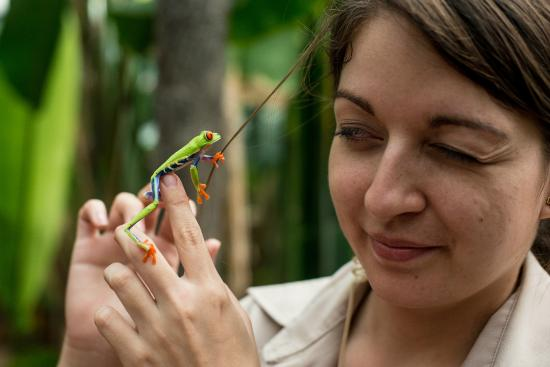 Arenal Natura Parque Ecológico: Anna charmed the kids with a red eyed tree frog