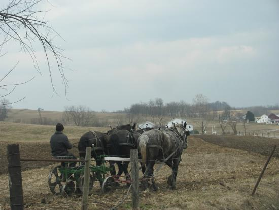 Amish Heartland Tours: Farming with horse plough