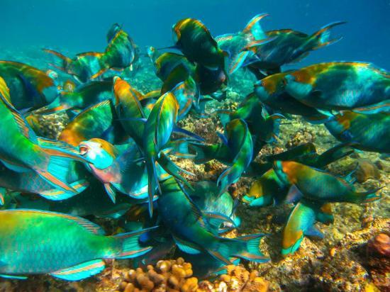 Kuramathi: diving