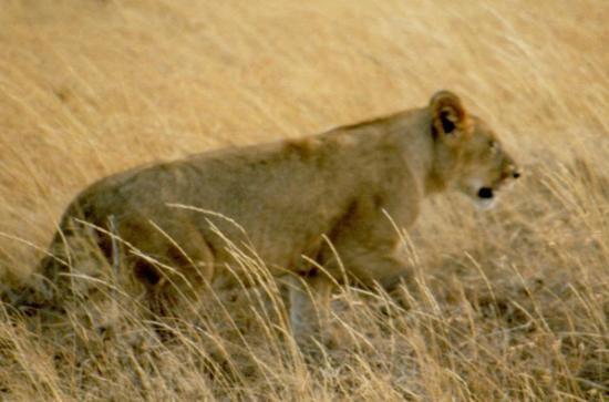 Rio Grumeti: Serengeti National Park
