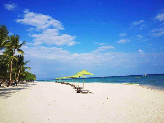Bohol Coconut Palms Resort : White beach