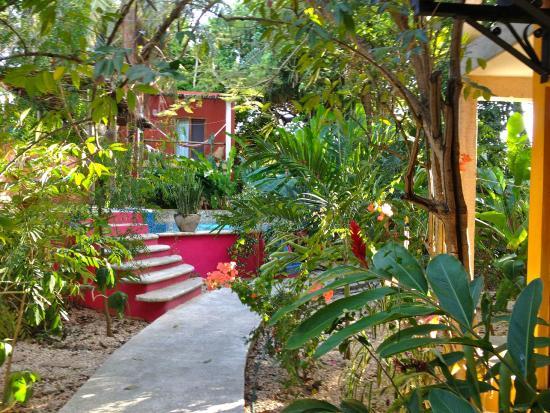 Casa Axis Mundi : backyard paradise