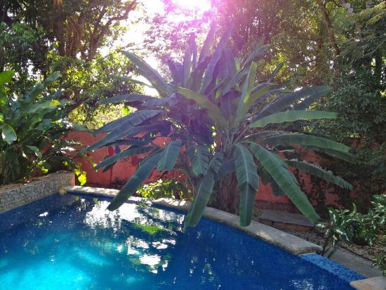 Casa Axis Mundi : Pool area