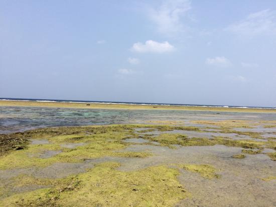 Cape Bisezaki : 干潮時になるとサンダルで移動可能