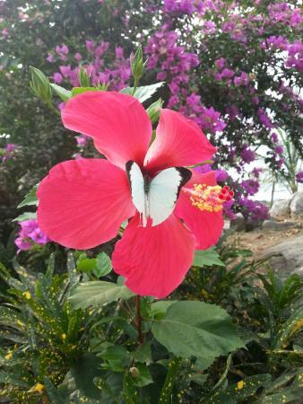 La Villa Elijah: jardin Villa Elijah