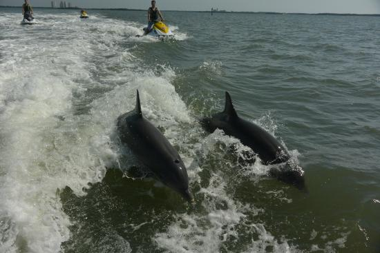 Doc S Beach House Dolphin Jet Ski Tours Picture Of