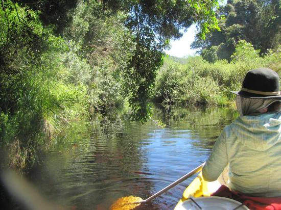 Wilderness, Südafrika: Along the Toew river