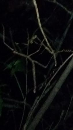 Santamaria Night Tour : walking stick
