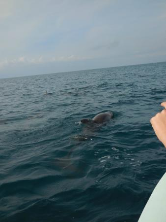 Happy Go Luckie Tours: Dolphins