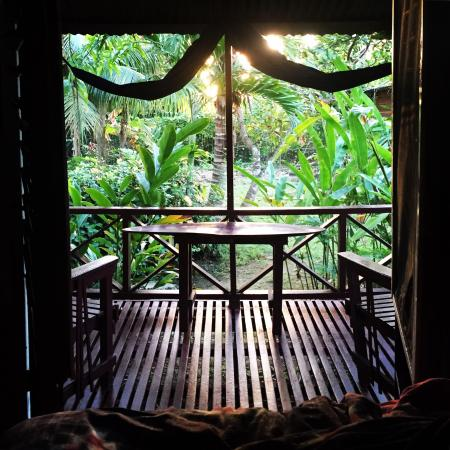 Negril Yoga Centre : View from my bed in Likle 2