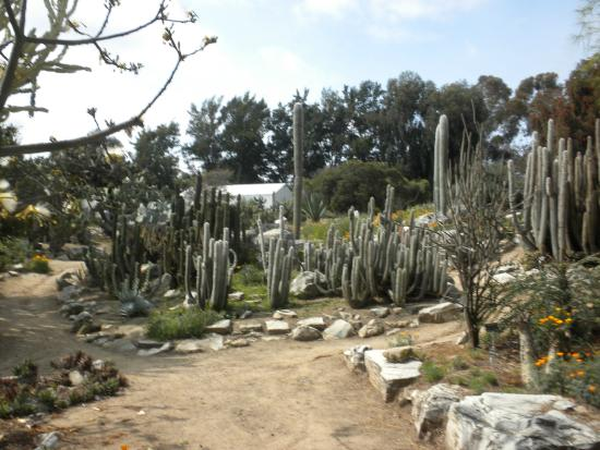 Roses Foto Di South Coast Botanic Garden Palos Verdes Estates Tripadvisor