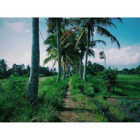 Kupu Kupu Bungalows : The walk home