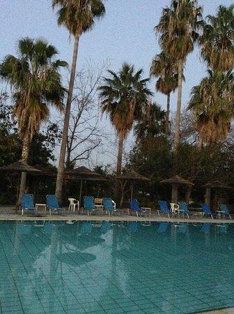 Veronica Hotel: Пожухшие пальмы у бассейна