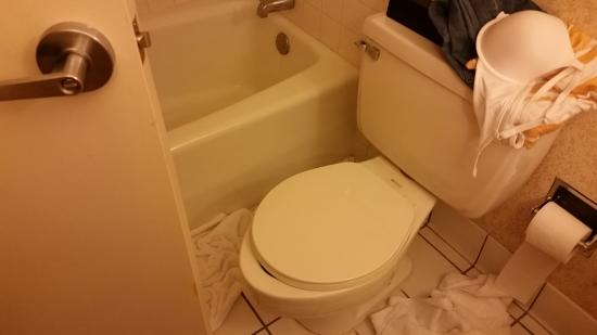 Pleasant Toilet Seat Doesnt Fit Picture Of Flamingo Las Vegas Short Links Chair Design For Home Short Linksinfo