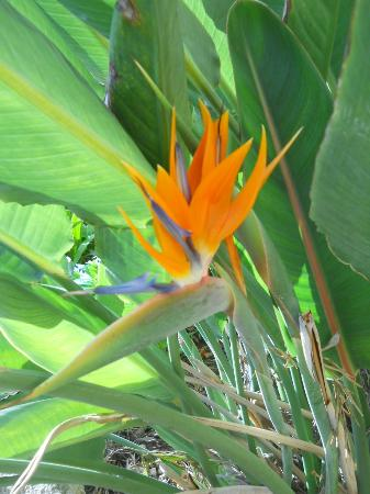 La Bodega Casa Rural: Strelitzia in the garden
