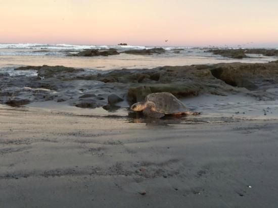 Albergue Arribadas : Beutifull mornings