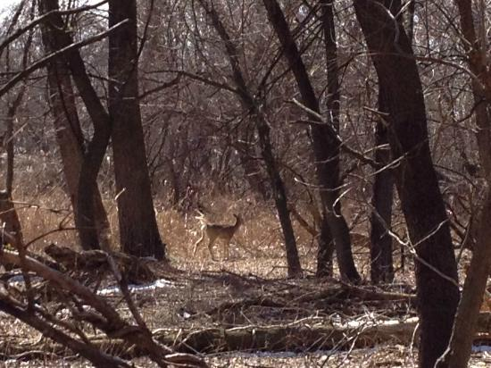 Palmyra Cove Nature Park: Saw 20+ deer resting in the woods