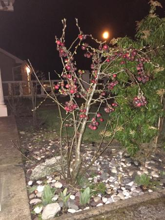 Springfield Lodge Bed & Breakfast: Cherry tree