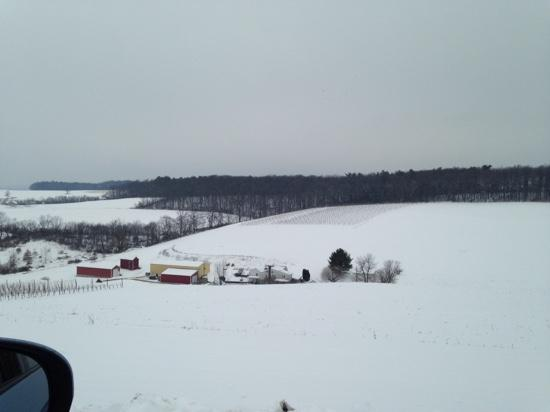 Blue Mountain Vineyards: snow in March did not deter our visit