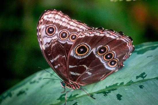 Butterfly Garden Picture Of San Diego Zoo Safari Park