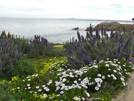Lovers Point Park: Flowers