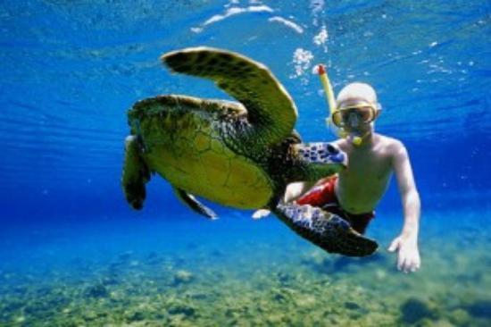 Hawaii Turtle Tours Circle Island