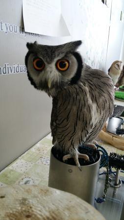 Owl Cafe Cu