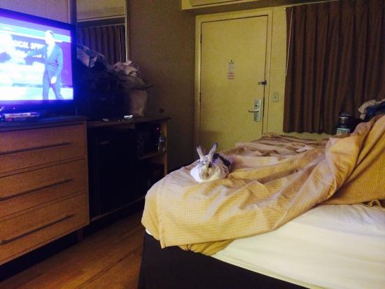 Red Roof Inn Louisville Fair And Expo: Narvik finds the TV and bed to be tops!!